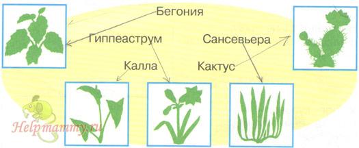 Картинки по запросу комнатные растения 2 класс